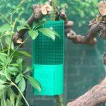 Chameleon Feeder Cups